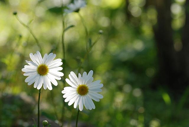 Sống hạnh phúc mỗi ngày: Đừng lo lắng