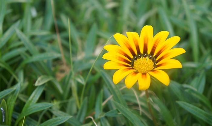 Bí quyết sống hạnh phúc: Bằng lòng với những gì mình đang có