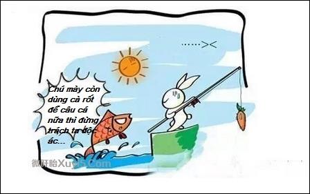 Bài học thành công: con thỏ câu cá bằng cà rốt