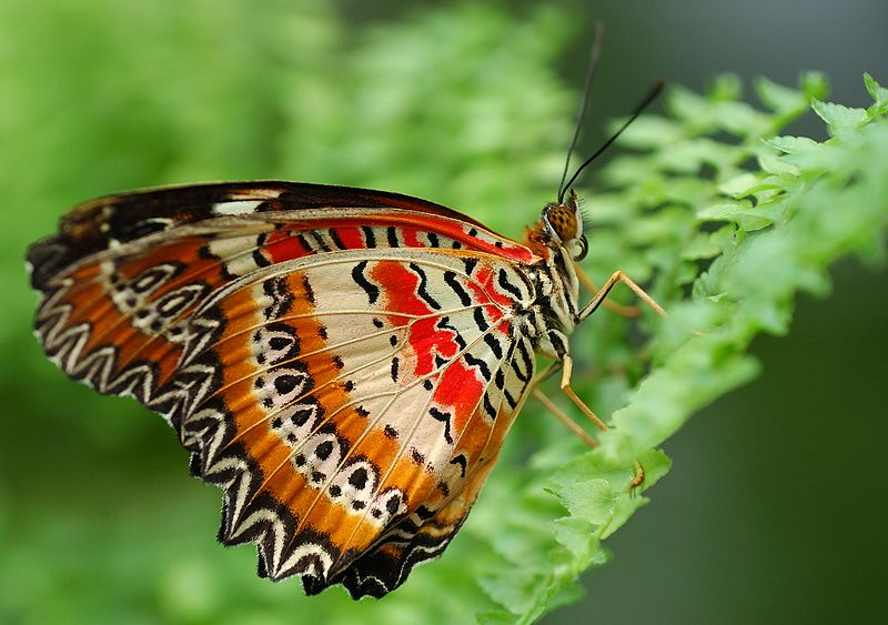 Con bướm, con sâu và cái kén –  bài học về sự trưởng thành