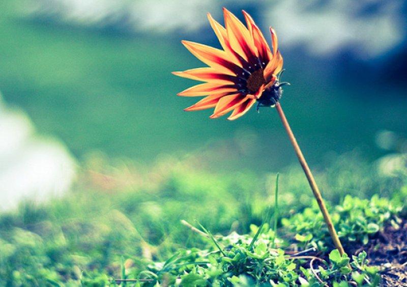 """Cuộc đời này có """"trăm điều dễ"""" nhưng có tới """"nghìn điều khó"""" thành quả chỉ dành cho những ai tích cực dù cuộc sống không công bằng"""