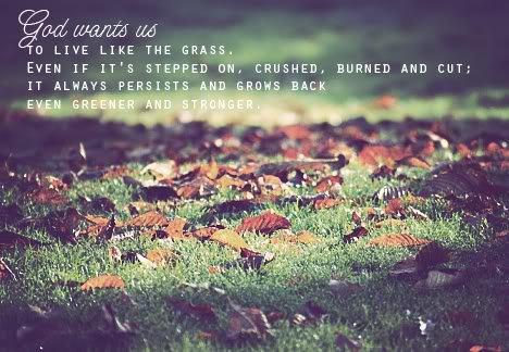 Hãy sống như mình là cỏ