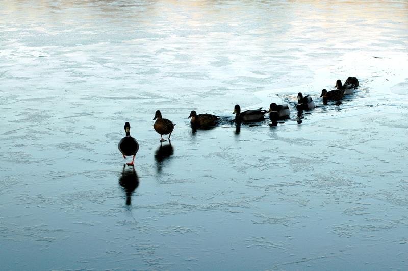 Khả năng lãnh đạo có phụ thuộc vào tính cách của bạn?