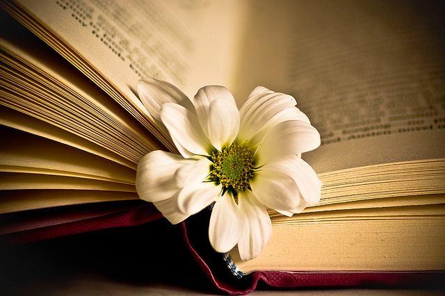sống hạnh phúc mỗi ngày: Đọc sách