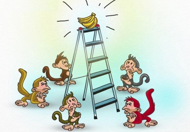 """5 chú khỉ, 1 nải chuối và thực trạng """"vùi dập"""" người khác trong xã hội hiện đại"""